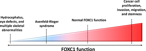 FOXC1 function and activity in human diseases.