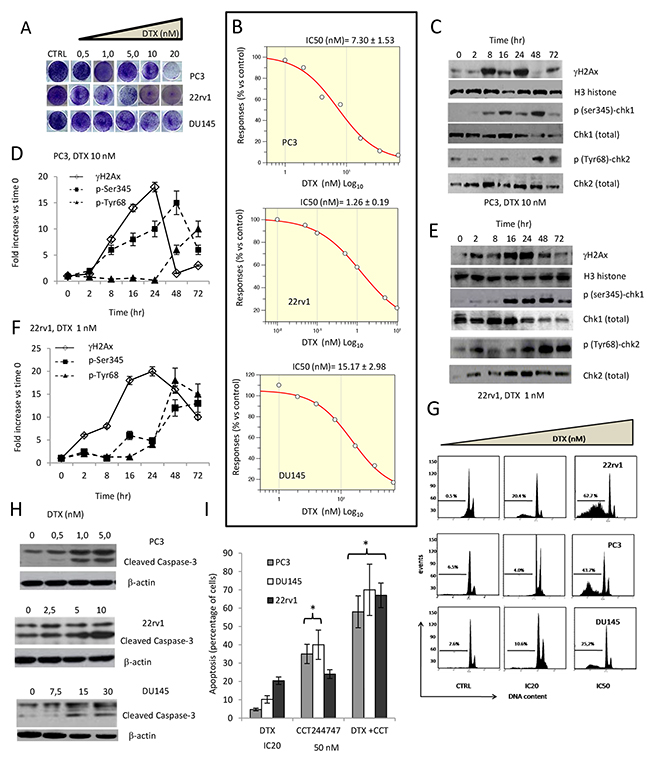Effects of docetaxel (DTX) in DTX sensitive (DTXS) PC3, 22rv1 and DU145 cell lines.