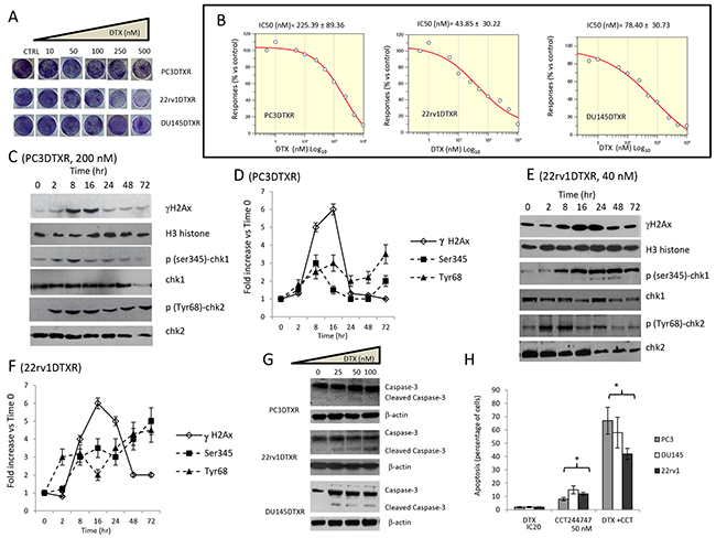 Effects of docetaxel (DTX) in DTX resistant (DTXR) PC3, 22rv1 and DU145 cell lines.