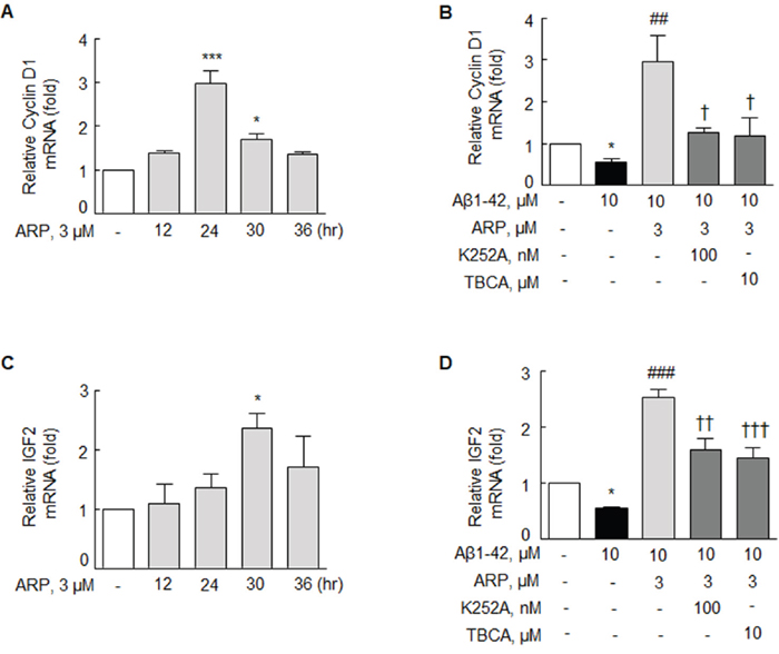 Effect of aripiprazole treatment on the expression of cyclin D1 and IGF2 mRNA in the N2a cells.