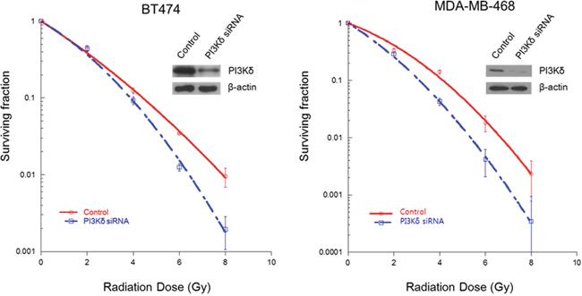 Radiosensitizing effect of PI3Kδ inhibition using RNAi.