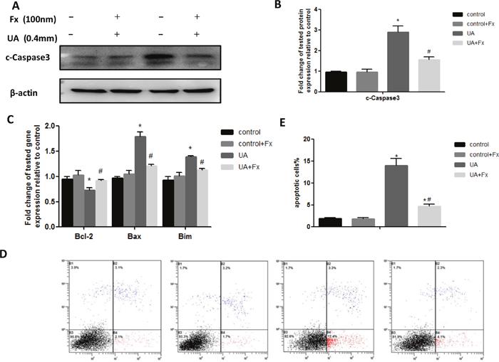 Febuxostat treatment alleviated UA induced apoptosis of NRK-52E cells.