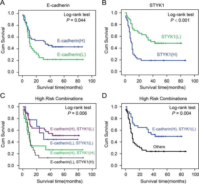 The correlation of STYK1 and E-cadherin expression with pancreatic cancer patients' prognosis.