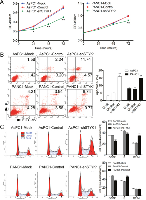 STYK1 knockdown inhibited cell proliferation, promoted apoptosis and induced cell cycle arrest.