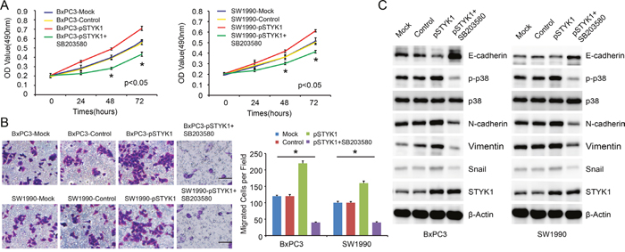 STYK1 promoted pancreatic cancer cell proliferation and migration through p38 MAPK signaling pathway.