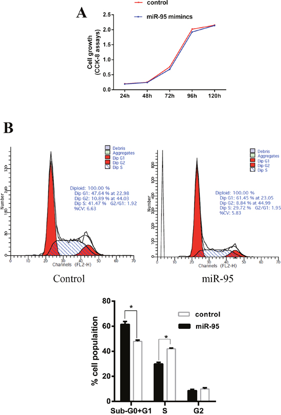 Effect of miR-95 mimics on C2C12 cell proliferation and cell cycle.