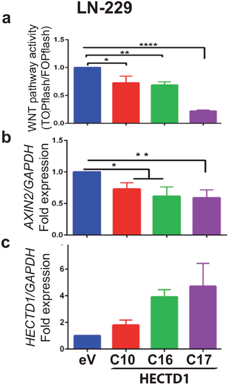 HECTD1 downregulates WNT pathway activity in LN-229.