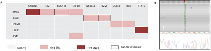 Mutational landscape in 6 cHL-derived cell lines and Sanger sequencing validation.