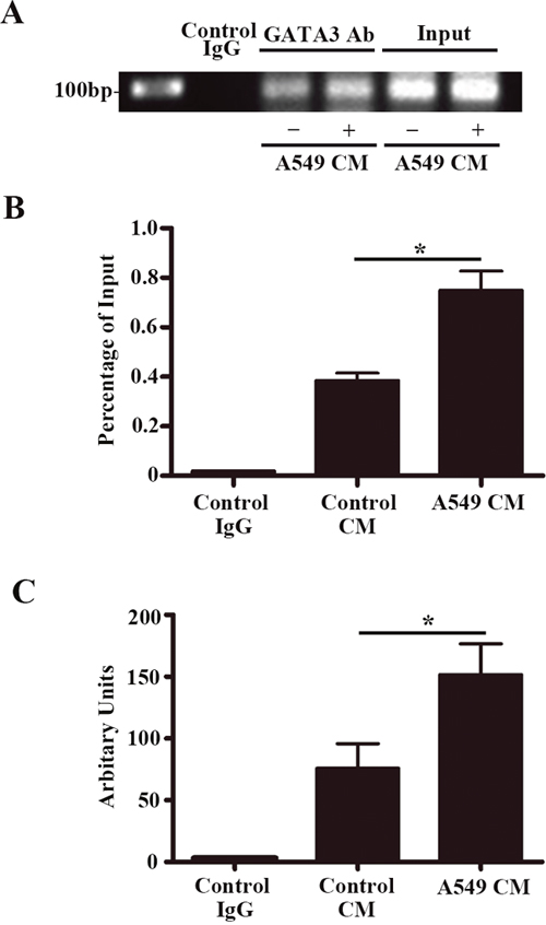 GATA3 binds to the +220 GATA motif on the vWF promoter and treatment of A549 conditioned medium enhances the binding affinity.