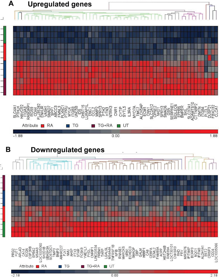 Heat maps of differentially regulated genes in dormant TF-1a cells.