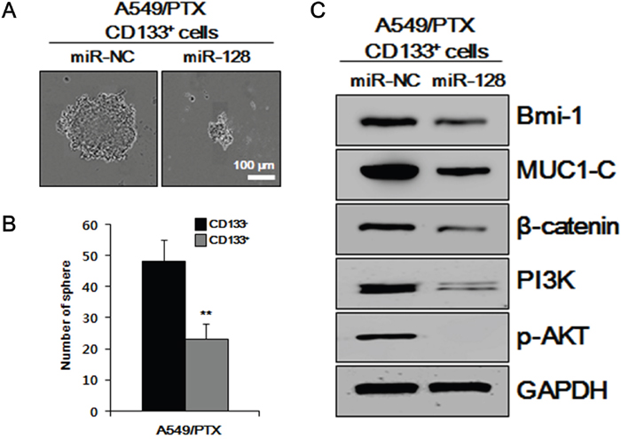 Effects of miR-128 overexpression in vitro on CSC-related characteristics.