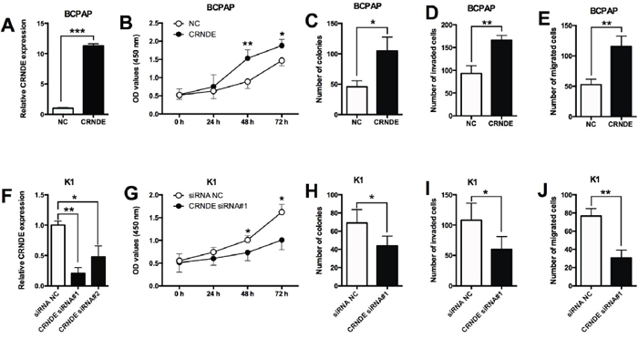 Effects of CRNDE overexpression/suppression on the proliferation and invasion/migration in PTC cells.