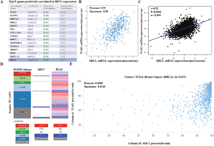 SDC1 mRNA expression is correlated to PLAU mRNA expression in breast cancer.