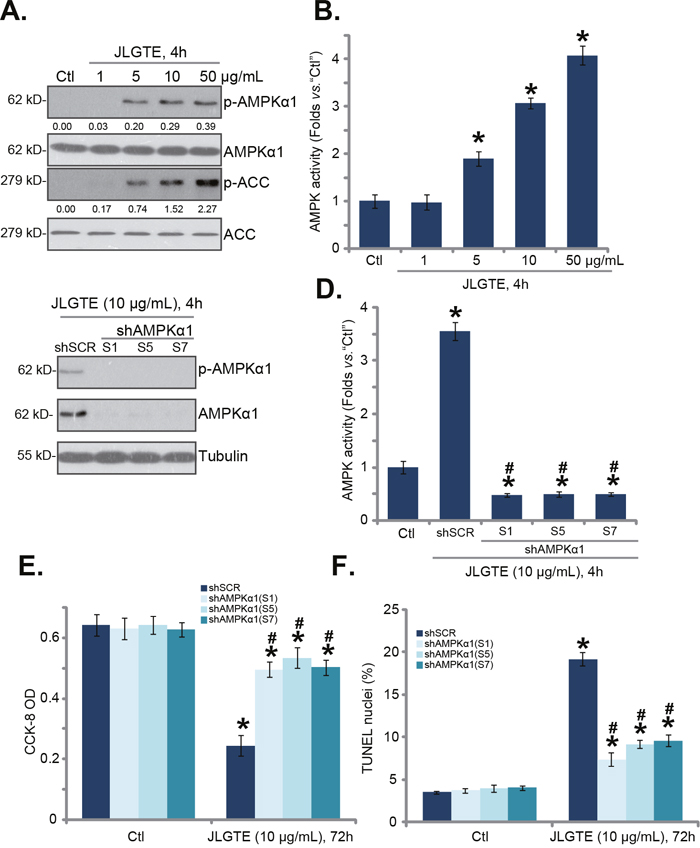 JLGTE activates AMPK in HCC cells.