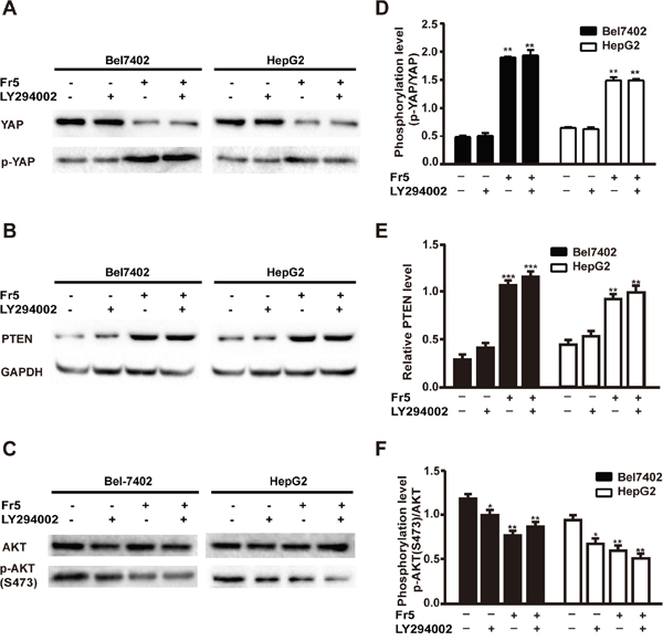 Effects of FR5, LY294002 or combination on Hippo-YAP and PTEN/PI3K/AKT pathways in Bel7402 and HepG2 cells.