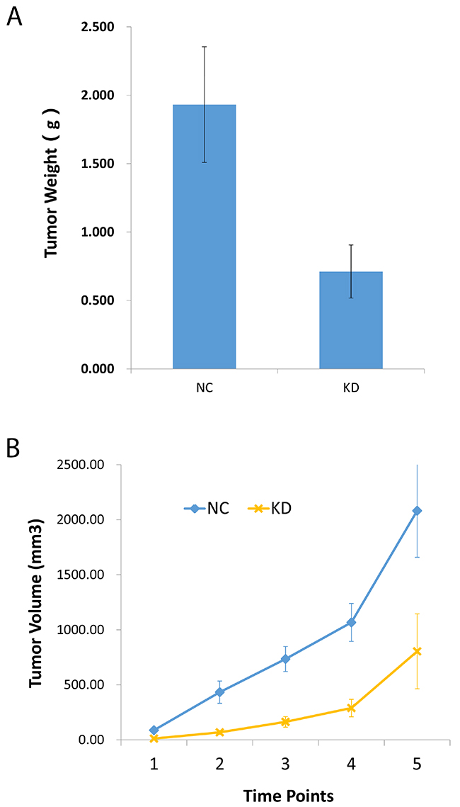 Knockdown of CCT3 suppressed gastric cancer cell growth in nude mice.