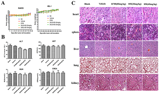 Cytotoxicity evaluation of SKLB-850.
