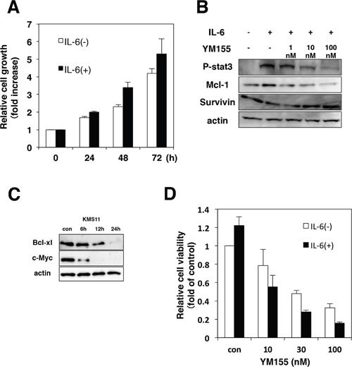 YM155 inhibits IL-6/STAT-3 signaling pathway.