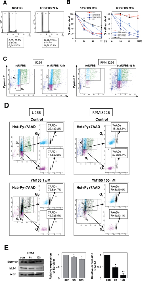 YM155 potently induces cell death in quiescent (G0/G1) MM cells.
