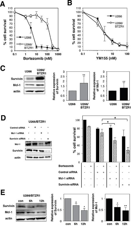 YM155 overcomes bortezomib resistance in MM cells.