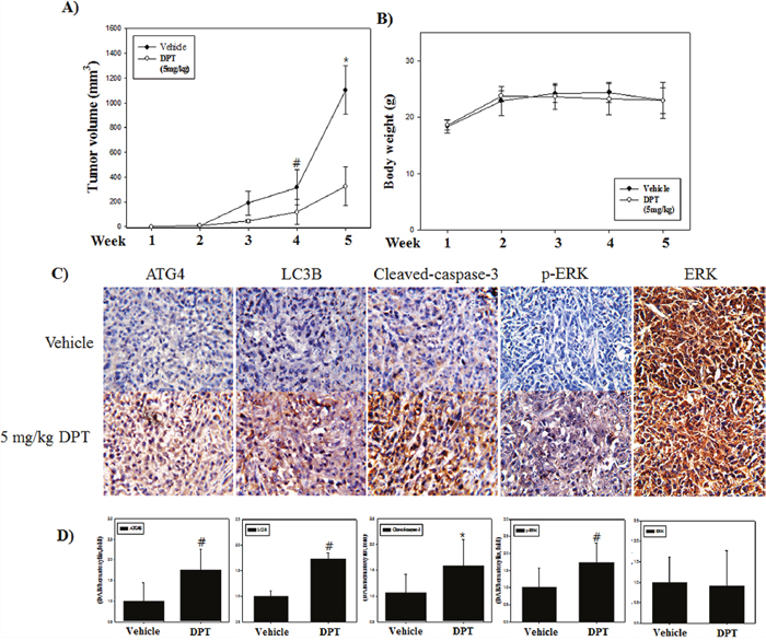 DPT inhibits growth and induces both apoptosis and autophagy of human prostate cancer xenograft in vivo.
