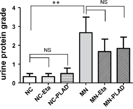 Effects of TNF blockade on proteinuria in mice with experimental MN.