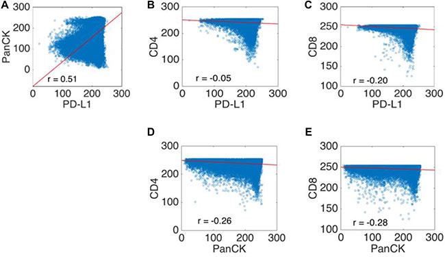 Scatter plots of the co-localization experiments using clone E1L3N.