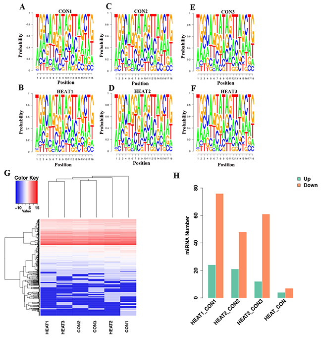 Deep analysis of sequencing of miRNA data.