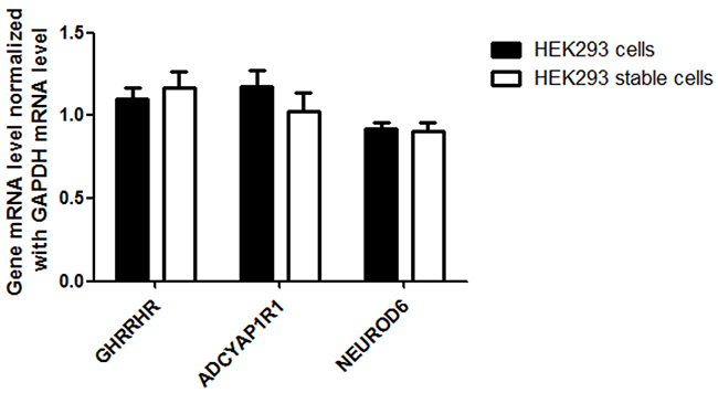 Detection of AQP1 downstream gene (GHRHR, ADCYAP1R1 and NEUROD6) expression in stable HEK 293 cells.