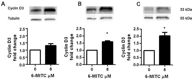 Effect of 6-MITC on cyclin D3 on HL-60 cells.