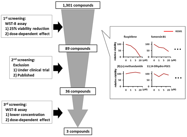 Schematic representation of the drug screening procedure.