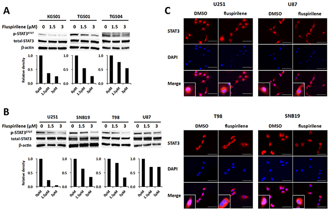 Inhibition of STAT3 activity and modulation of STAT3 translocation into the nucleus by fluspirilene.
