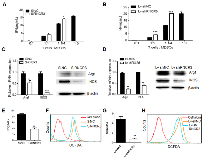 RNCR3 knockdown impairs immunosuppressive function of MDSCs in vitro.