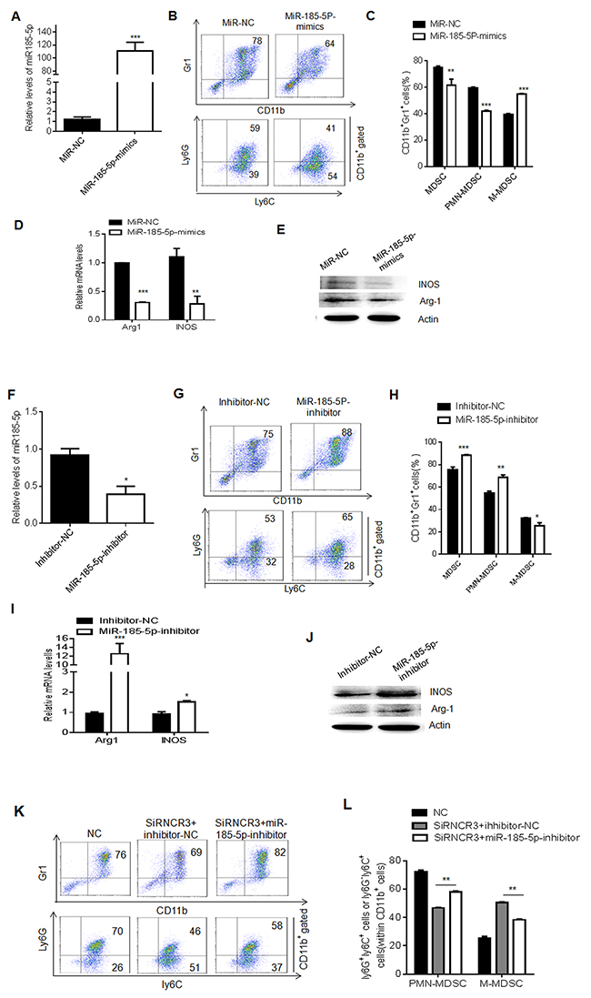 MiR-185-5p regulates differentiation and function of MDSCs.