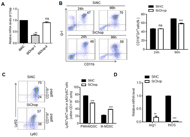 Chop knockdown exerts the same effect to miR-185-5p mimics during MDSC differentiation.