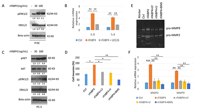 AKT and ERK signaling pathways are required for FABP4 induced PrSC activation and upregulation of PCa cell invasiveness.