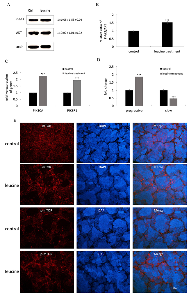 The effects of leucine treatment on zebrafish sperm motility the activation of PI3K/Akt signaling pathway.