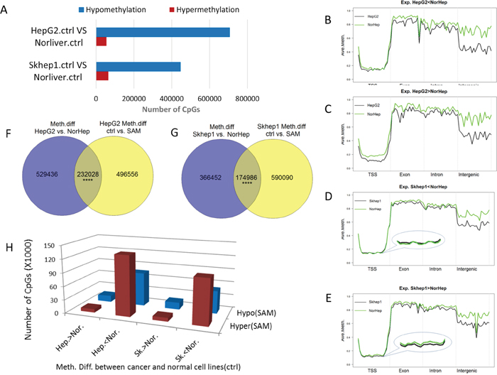 SAM reverses differences in DNA methylation and expression between liver cancer cells and normal primary liver cells.