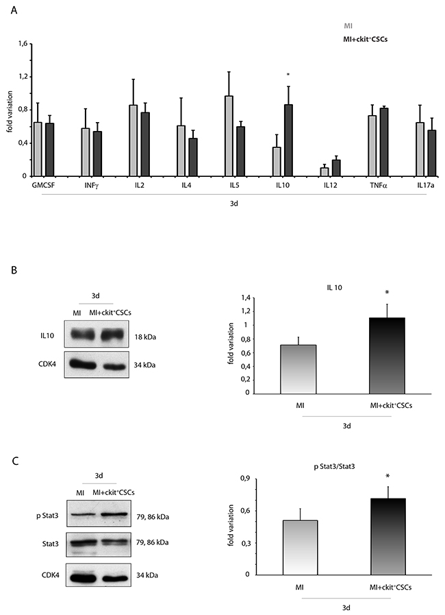 ckit+CSCs enhance circulating levels and protein expression of IL10 in infarcted hearts following transplantation.