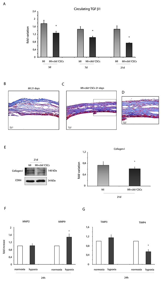 ckit+CSCs reduce the expression of fibrotic markers.