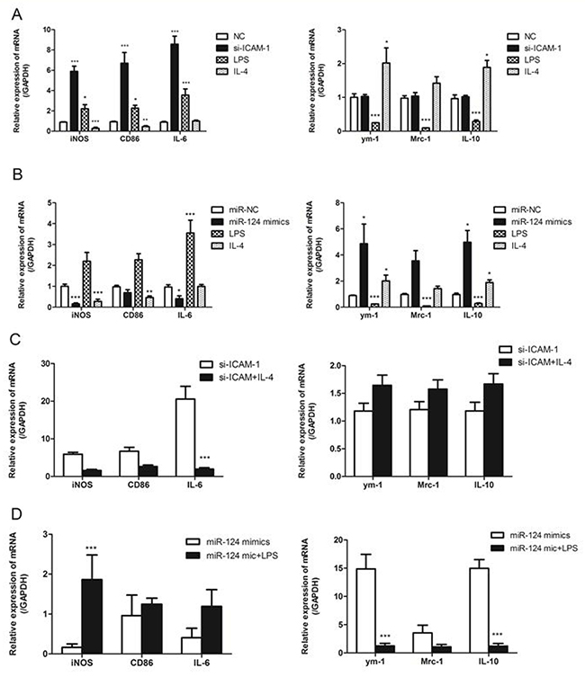 ICAM-1 and miR-124 induce different macrophage polarizations.