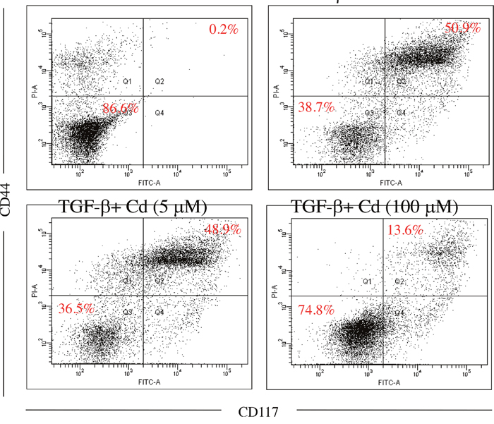 The effects of cordycepin (Cd) on cancer stemness induced by TGF-beta in SKOV-3 cancer cells.