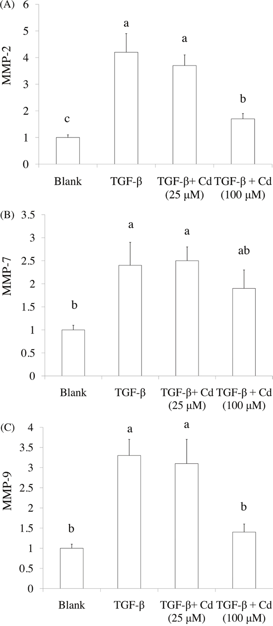The effects of cordycepin (Cd) on MMP-2, MMP-9, and MMP-7 expression in TGF-beta-induced cancer stem cells by real-time PCR.