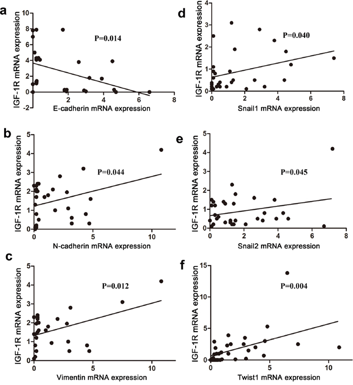 Correlation between IGF-1R and EMT markers in human HCC tissues.