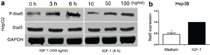 The effect of IGF-1 on Stat5 signaling in HepG2 and Hep3B cells.