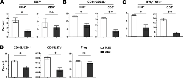 Antibiotics administration results in diminished T cell activation in CTX-treated mice.