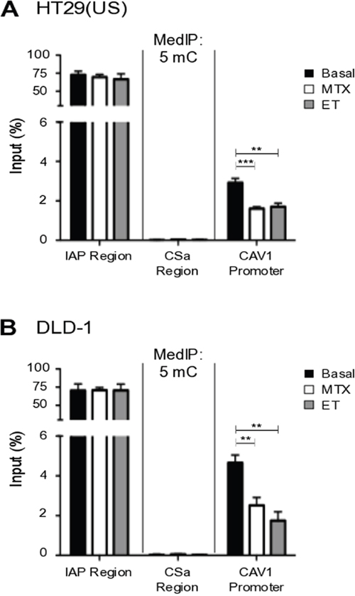 Methotrexate and Etoposide induce CAV1 promoter demethylation in colon cancer cells.