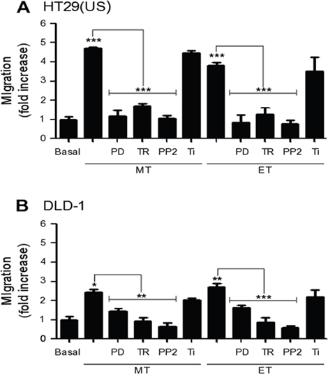 Effect of MEK and Src family kinase inhibition, as well as the anti-oxidants Trolox and Tiron on cell migration induced by Methotrexate and Etoposide.