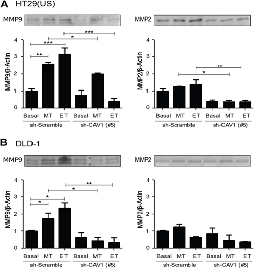 CAV1 silencing decreases metalloproteinase activity induced by Methotrexate and Etoposide in colon cancer cell lines.