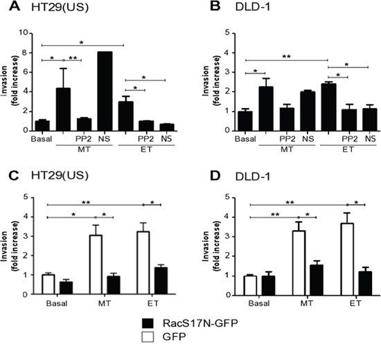 Methotrexate and Etoposide increase cancer cell invasion in a Src family kinase and Rac1 dependent manner.